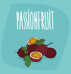isolated ripe passion fruit or passionfruit vector image
