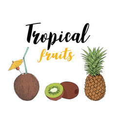 Tropical fruit kiwi pineapple coconut cocktail vector