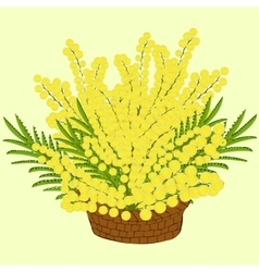 Mimosa flowers in the basket vector
