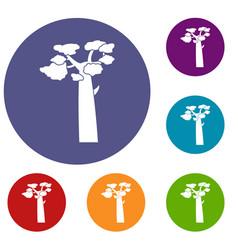 Baobab icons set vector