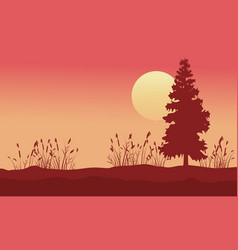 beauty scenery with spruce and grass at sunrise vector image vector image