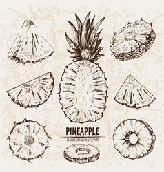 digital detailed line art pineapple vector image