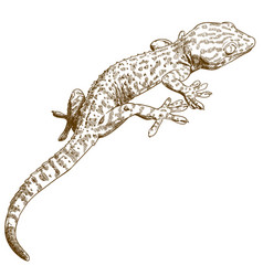 engraving of gecko vector image