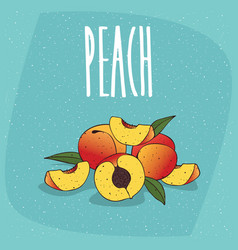 isolated ripe peach fruits with leaves vector image