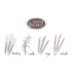 Organic grain sketch hand drawing vector