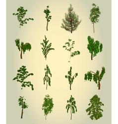 Set Tree Element for design vector image vector image