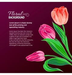 Red tulips and text place vector image