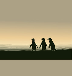 silhouette of penguin lined at sunset scenery vector image