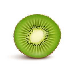Fresh kiwi fruit slice vector