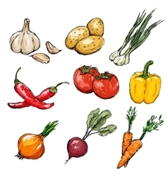 Vegetables set vector image vector image