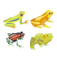 Frog cartoon tropical animals vector