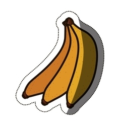 Isolated banana fruit design vector