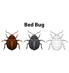 Bed bug in three sketches vector