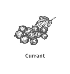 hand-drawn currant vector image vector image