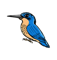 kingfisher side view vector image