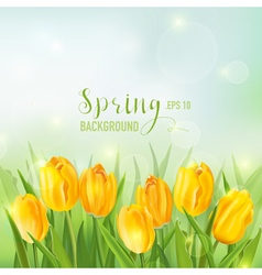 Spring background - with yellow tulips flowers vector