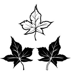 black maple leaf shape outline contour icons vector image vector image