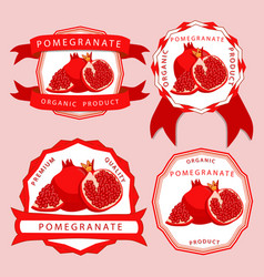 the red pomegranate vector image