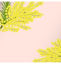 Floral background branches mimosa vector