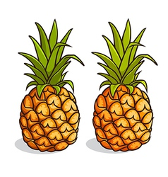 Pineapples vector