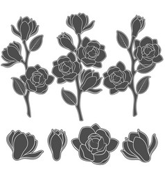 Set of with flowering magnolia vector