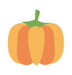 Fresh pumpkin vegetable vector