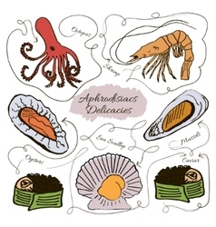 Hand drawn collection of seafood vector image vector image