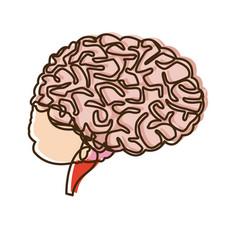 Human brain for medical healthy memory anatomy vector