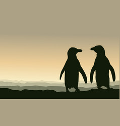 Silhouette penguin at sunset scenery vector