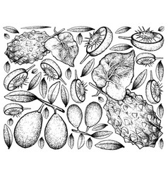 Hand drawn of ambarella and horned melon on white vector