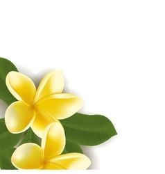 Background with realistic frangipani flower vector