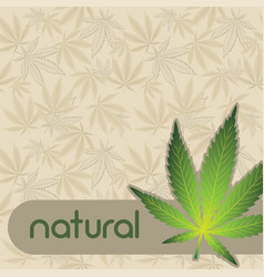 background with cannabis vector image