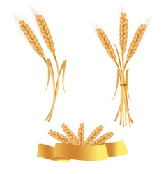 Set of gold ears vector