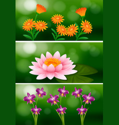 background design with different types of flowers vector image vector image