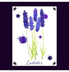 greeting card with watercolor lavender vector image vector image