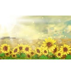 Summer sun over the sunflower field vector image