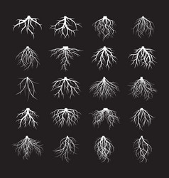 big set of white roots on black backgroung vector image