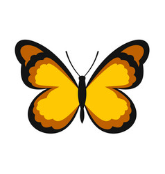 insect butterfly with pattern on wings icon vector image
