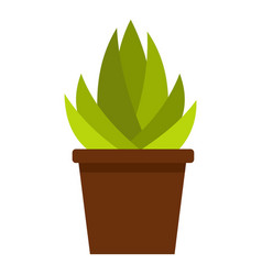 succulent in flower pot icon isolated vector image