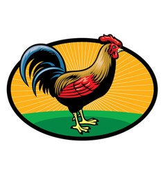 Chicken rooster vector