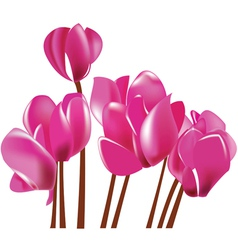 Cyclamen flowers vector