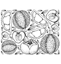 Hand drawn background of durian and persimmon vector
