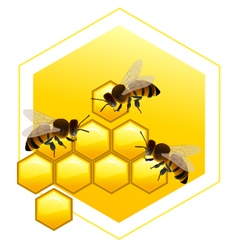 Honeycombs with bees vector