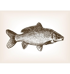 Carp fish hand drawn sketch vector