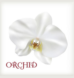 white flower orchid vector image vector image