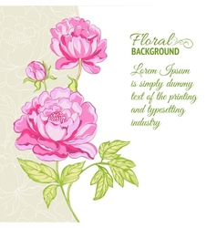 Pink peonies background with sample text vector