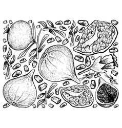 Hand drawn background of fresh figs and pomegranat vector