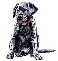 Labrador retriever 02 vector