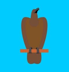 Hawk isolated golden eagle on blue background big vector