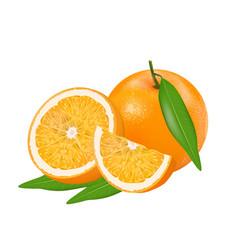 fresh orange vector image